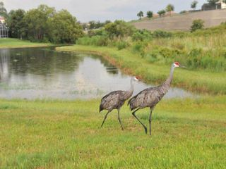 Rolling Hills villa photo - Florida Crane family