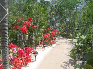 Long Island villa photo - .pathway to the villa flowers in full bloom