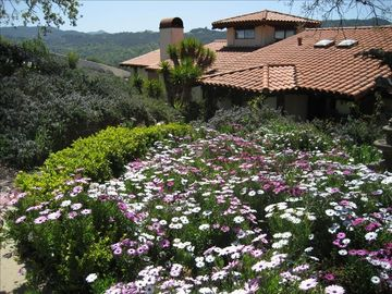 Atascadero house rental - Front Entrance during the spring.