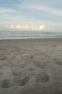 Sea turtle tracks...possible May through October