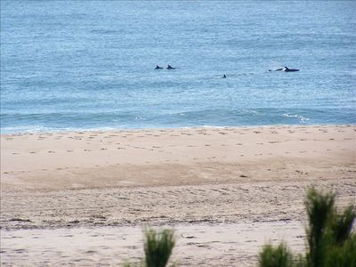 watch dolphins swim from the ocean front deck