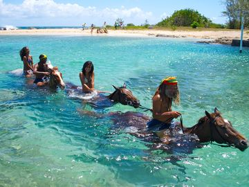 Ride a sea horse for free if you book for 7 nights!...