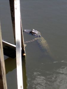 This guy hangs out at the dock every now and then.
