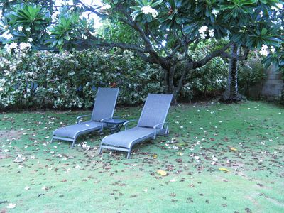 Relax in these inviting chaise lounges under the shade of a plumeria tree