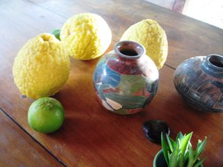 Montezuma house photo - Giant lemons,limes:from the yard for your lemonade