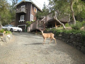 Cambria house rental - Acorn Hideaway with afternoon visitor
