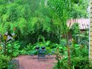 Tropical backyard of 608 North Street. - Beaufort house vacation rental photo