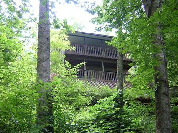 Sylva cabin rental - View From 'Bold Rushing Creek' Below Our Cabin/Home.