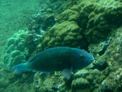 Or snorkel with the tropical fish