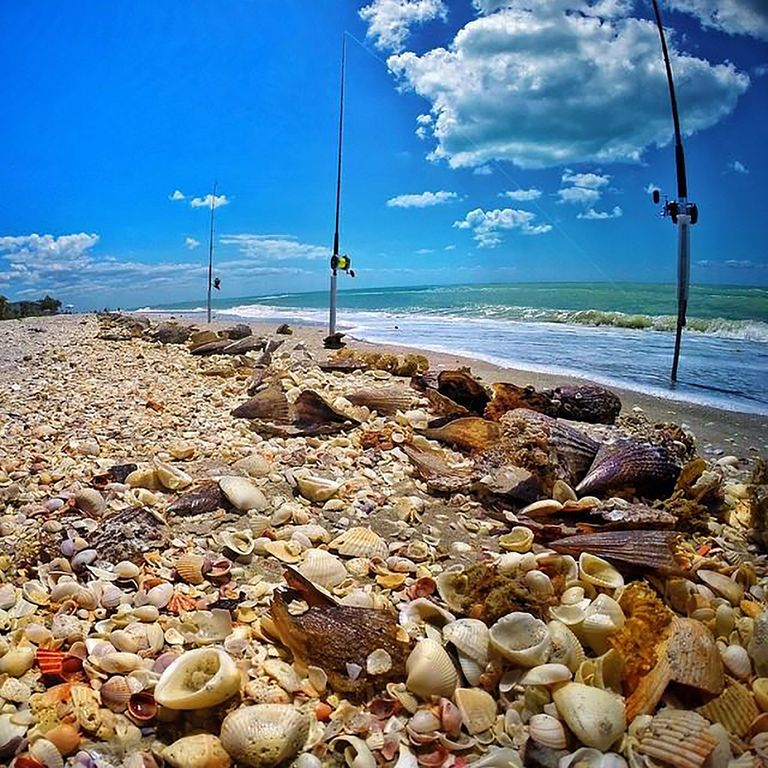 Seashells can wash up in abundance on our white sand beaches.