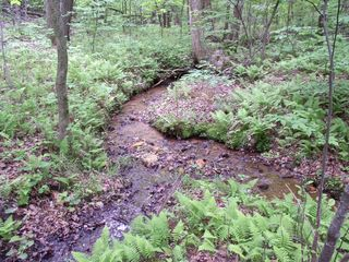 Big Canoe house photo - Mountain stream behind house
