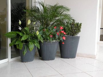 Lots of tropical plants on large private terrace