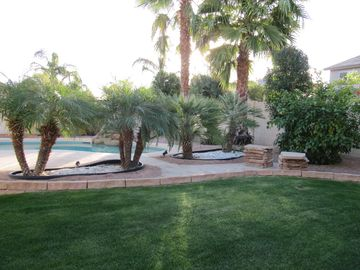 Goodyear house rental - Backyard Oasis with the perfect combination of sun, shade and water!