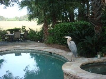 Sea Pines house rental - Nature in the Backyard by the Heated Pool & Spa