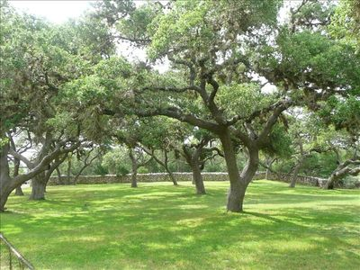 Front Yard with 25 large Oak Trees