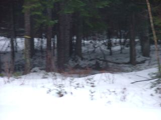 Pittsburg cabin photo - 1-8-12