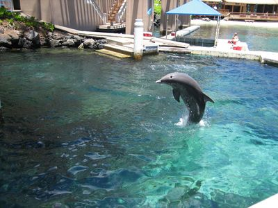 Things to do: Dolphin Quest at the Hilton
