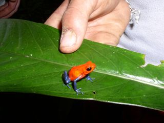 Volcano Arenal house photo - Bluejean Frog