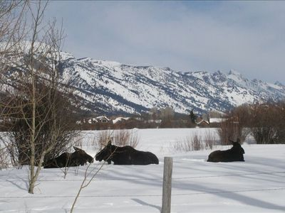 Looking from our front yard to ski area and Tetons. Moose frequent the area,