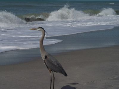 Shake hands with a Great Blue Heron while walking on pristine beaches.