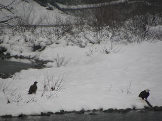 Stevens Pass cabin photo - Unique experience to observe American Eagles feeding from river