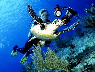 Cayman Brac house rental - --about to take an extreme close up photo of a Hawksbill-