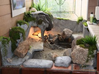 Del Mar house photo - Tortworld: climate-controlled enclosure for the house's two tortoises