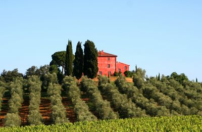Paganico farmhouse rental - View of the farmhouse from the Vineyards
