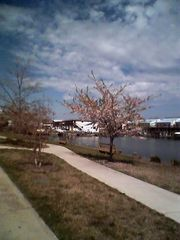 Vacation Homes in Ocean City condo photo - The canal is the widest in Ocean City!