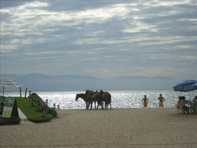 Horsebacking riding available on the beach