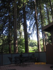Just relax and enjoy the majestic redwoods.