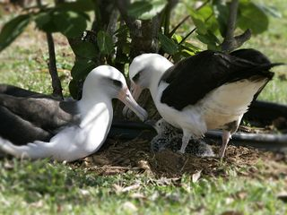 Princeville house photo - Meet the neighbors - The Albatross Family