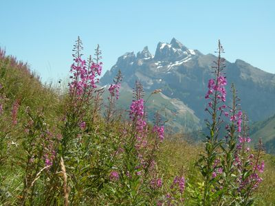Spectacular summer alpine scenery