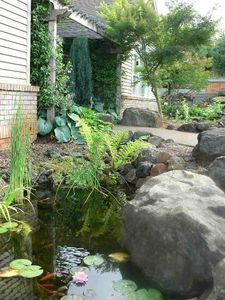 Dundee house rental - Our water feature and pond brings in many birds to bath and eat !