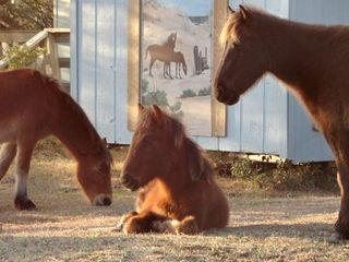 Carova house photo - Wild horses in front of house mural.