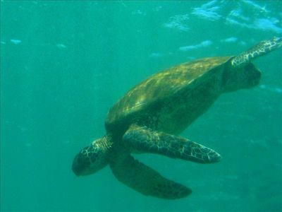 Or swim with the turtles