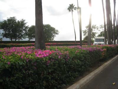 Fowers on drive into Kamaole Sands