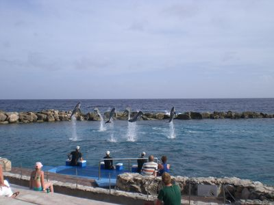 Learn about local sea life. See the sea lion and dolphin shows at the aquarium