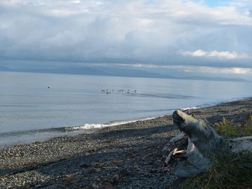 Qualicum Beach in the fall at high tide