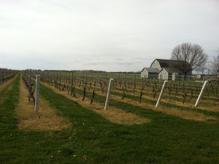 Southold house photo - Local Vineyard in early Spring