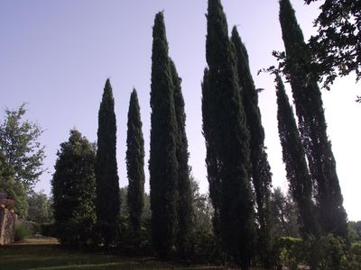 The Garden: Sunrise on the Cypresses