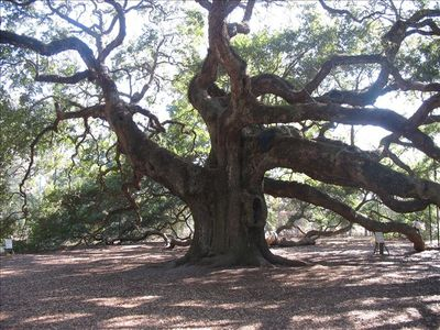 Visit the Angel Oak