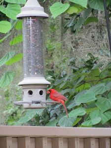 Shipyard villa rental - Bird feeder provides wildlife entertainment