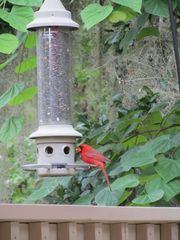 Shipyard villa photo - Bird feeder provides wildlife entertainment