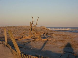 Assateague Island Beach-Bike or Hike to private sandy dunes even in summer.