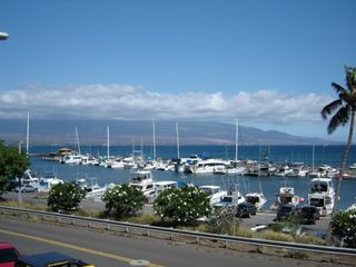 Maalaea condo photo - Walk to Harbor For Snorkel, Fish or Dinner Cruises