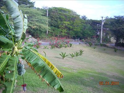 Vieques Island house rental - Banana tree and front yard landscaping