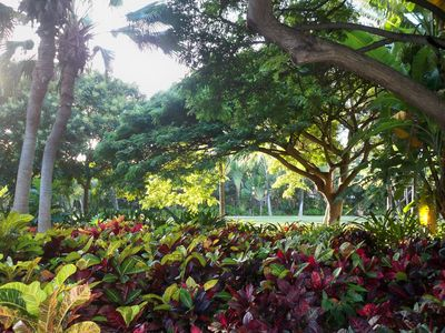 Enjoy Hawaiian Foilage on Serene Walk to Waikiki Beach Through Fort DeRussy Park