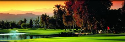 Beauty of Palm Desert