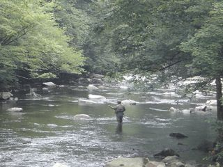 Fly Fishing in the Little River - Gatlinburg condo vacation rental photo